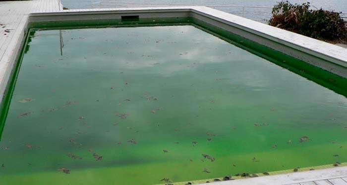 tipo-de-algas-en-la-piscina