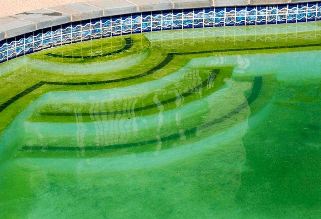 Algas en la piscina: Fosfatos